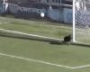 Otro perro que evita que el balón entre en la meta